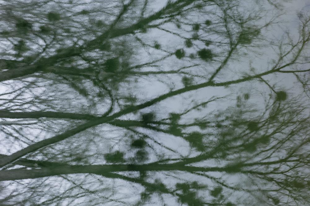 Fotoseminar Donauauen